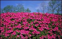 寬屏日本風景 1440*900 7 - [wall001.com]_widescreen_nature_wallpaper_IMG0038.jpg